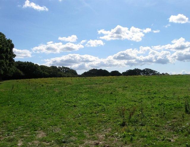 Further Mill Field (1)