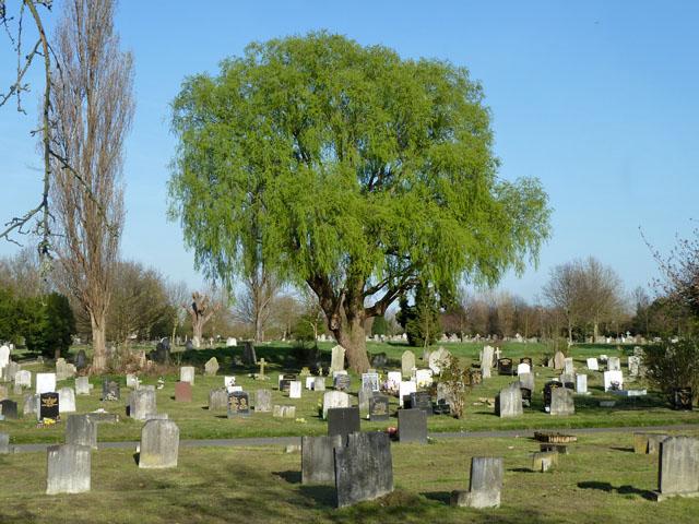 Tree in Morden Cemetery