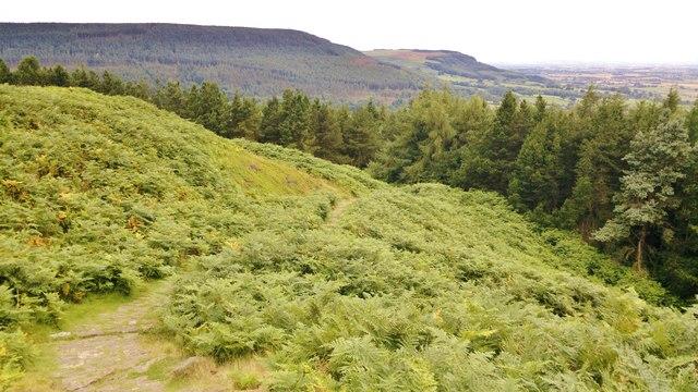 Descending towards Live Moor Plantation