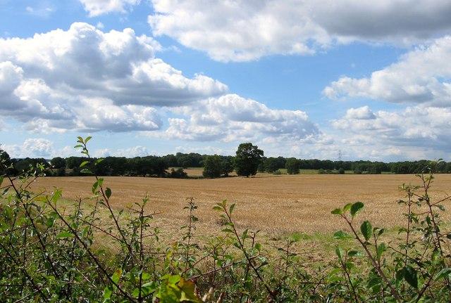 Meadow Field/Upper Herrings/Lower Herrings