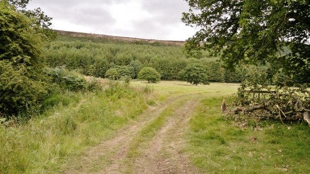 Track near Harfa Bank Farm