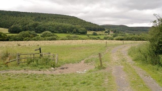Track in Scugdale near Harfa Bank Farm