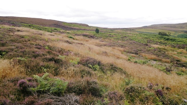 Moorland above Barker's Crags