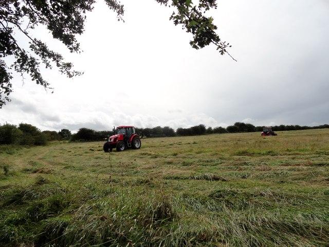 Haymaking near Clough Dene