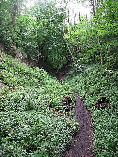 Limestone quarry, Wren's Nest
