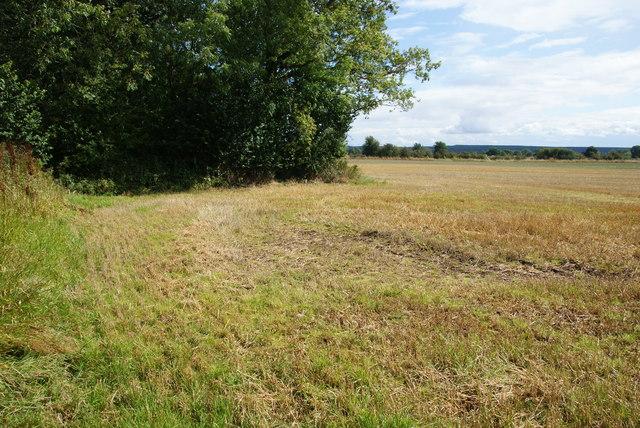 Fieldside path