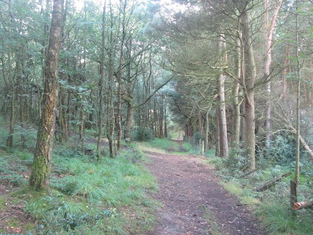 Footpath in Cock Wood