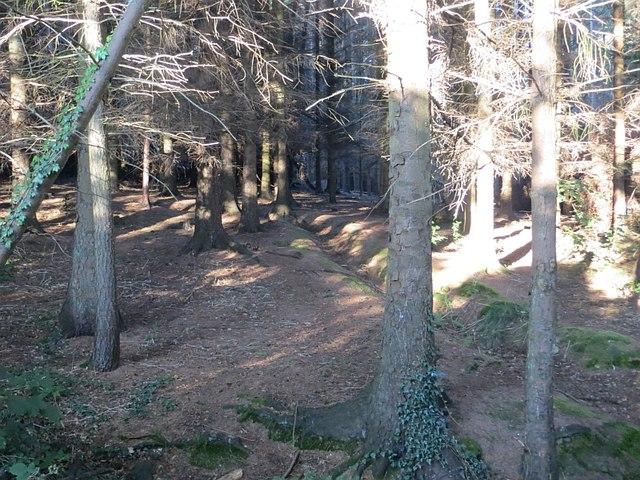 Kinneil Wood