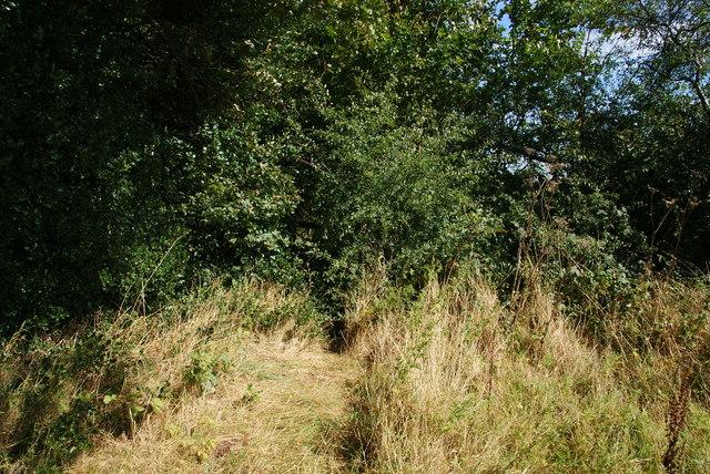 A path through the hedge?