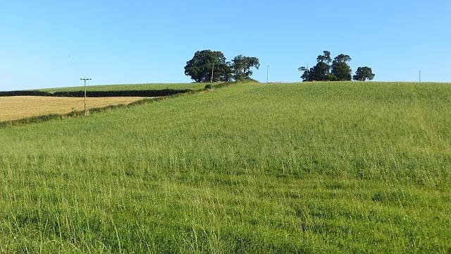 Fields, Balderston