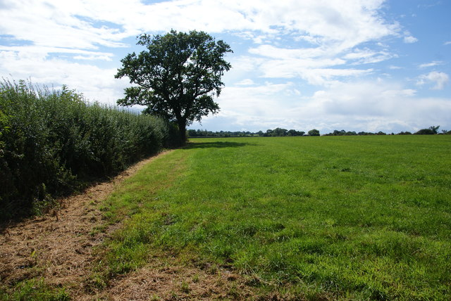 Field boundary above Loxley Green