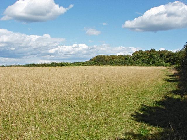 Field on chalk downland