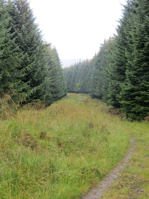 Track, Griffin Forest