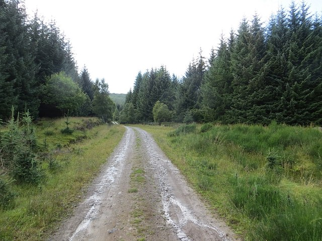 Road, Griffin Forest