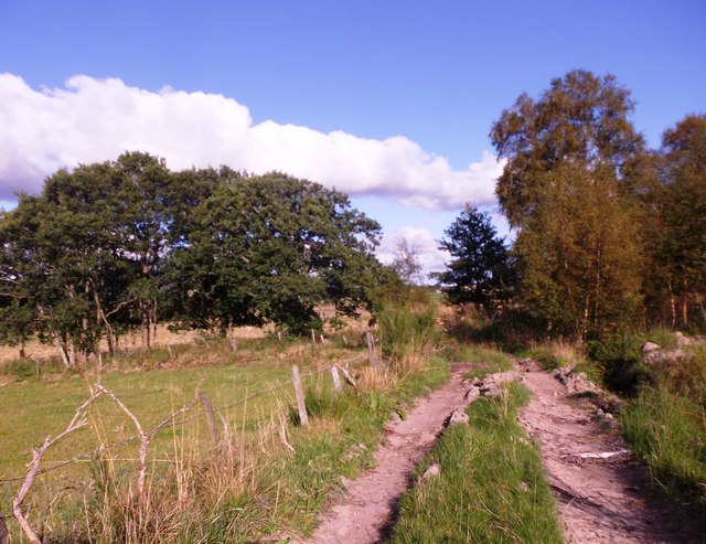 A dogleg bend in the lane from Crooktree