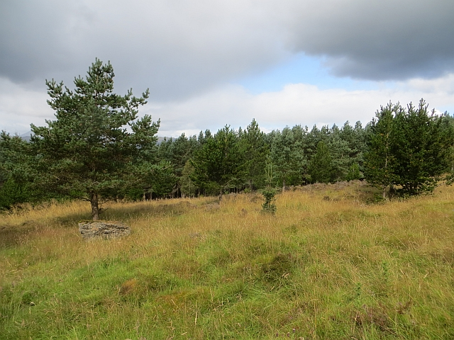 Clearing, Griffin Forest