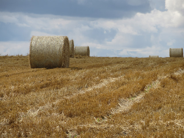 Harvest in and straw baled