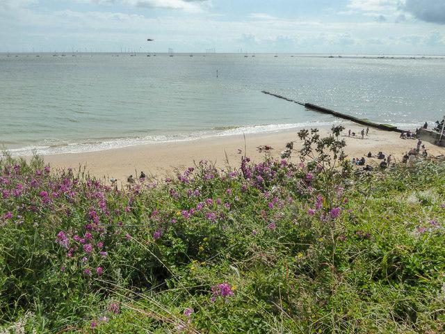 Flowers on the Cliffs, Clacton, Essex