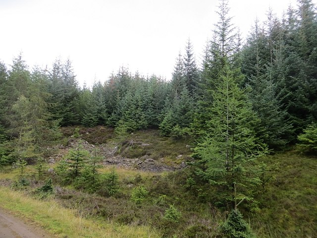 Borrow pit, Griffin Forest