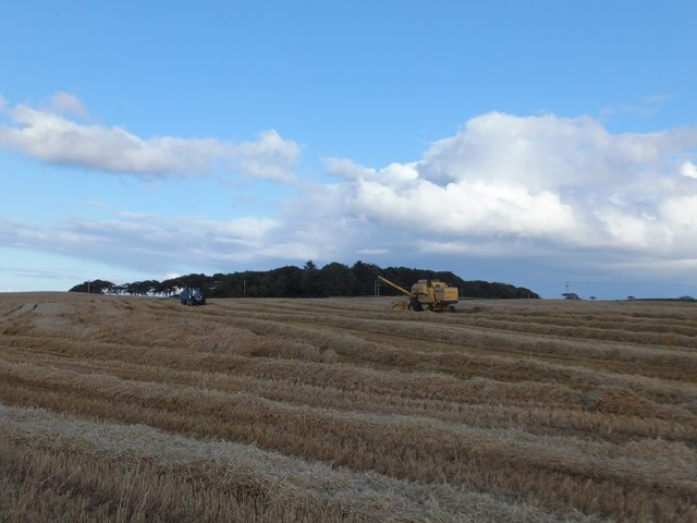 Harvesting at Petley Farm