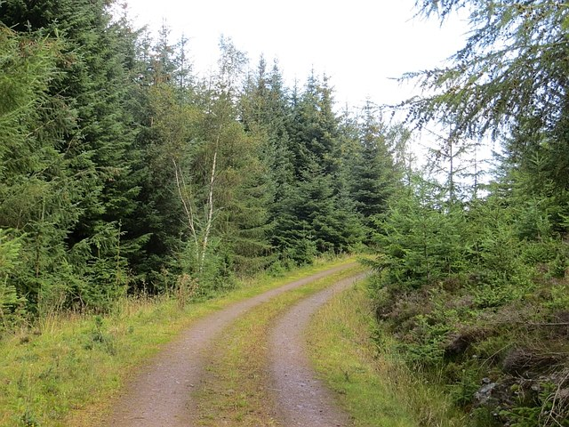 Logging road, Griffin Forest