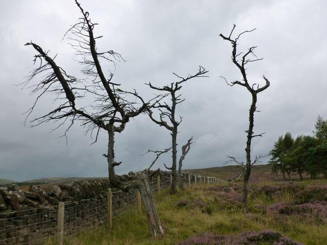 Skeletal trees by the march fence