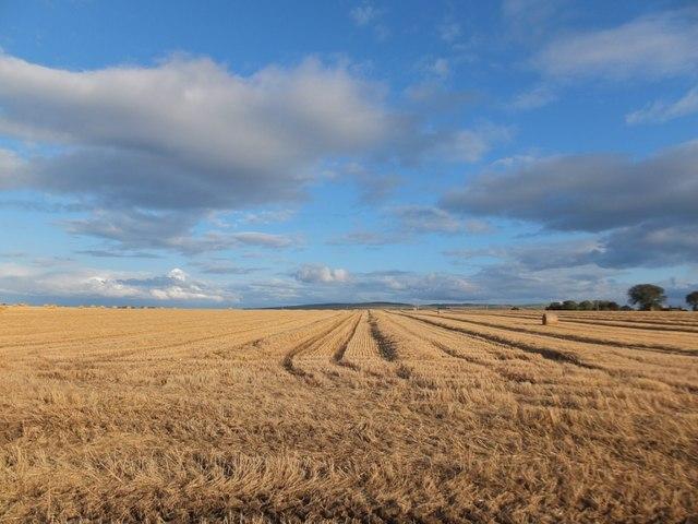 Stubble field, Glastullich