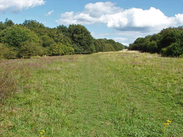 Woodland ride, Clandon Downs