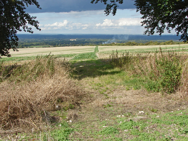 View from Clandon Downs