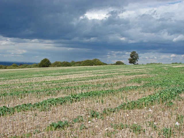 Field by Staple Lane