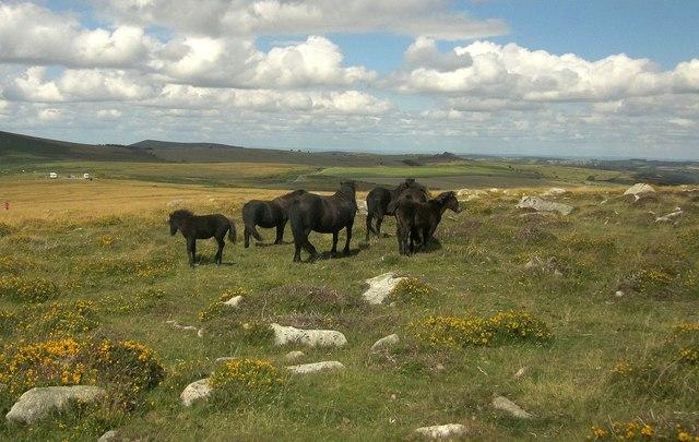 Ponies near Top Tor