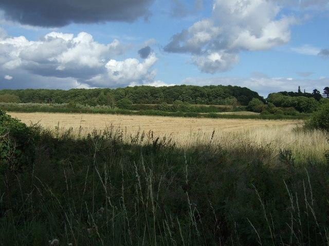 Crop field towards woodland