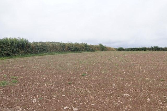 Farmland west of Petrockstowe