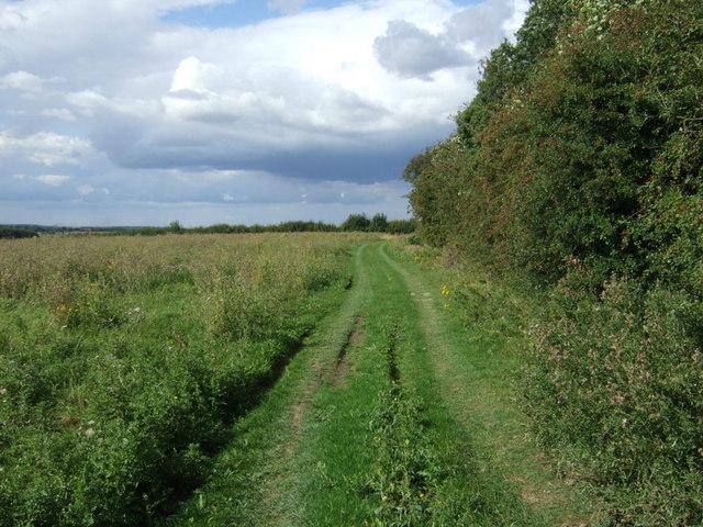 Farm track beside woodland