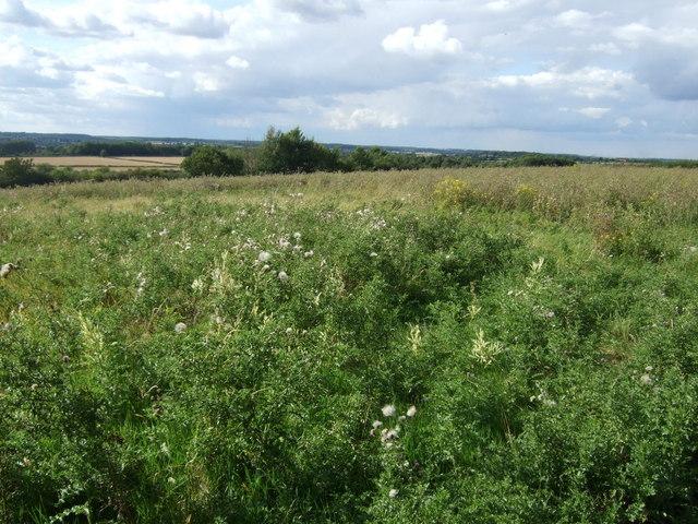 Farmland off Oundle Road