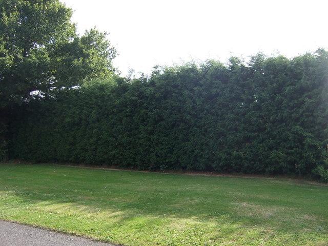 Hedge beside Bullock Road