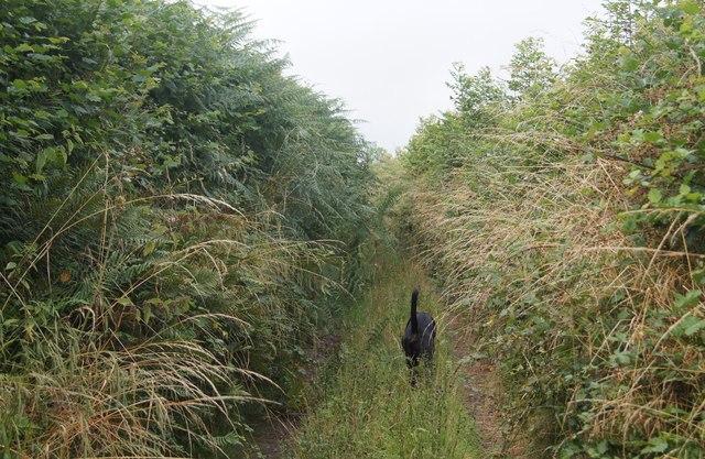 Seldom used footpath / farm track