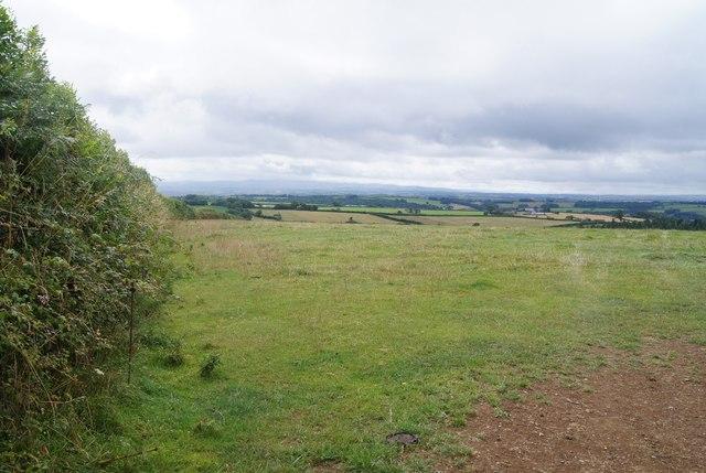Well grazed field