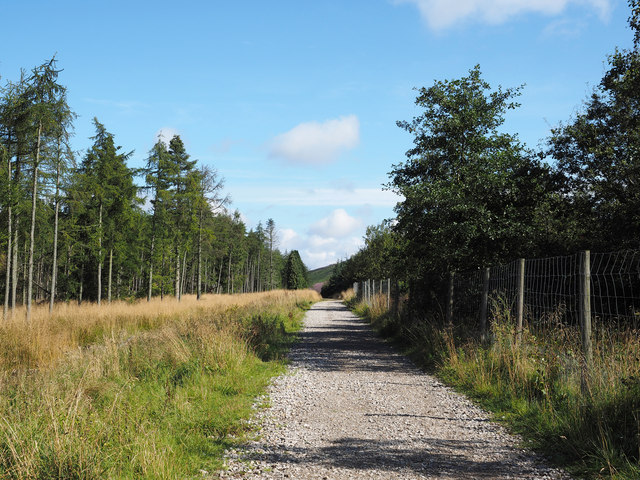 Forestry road near to Cod Beck Reservoir