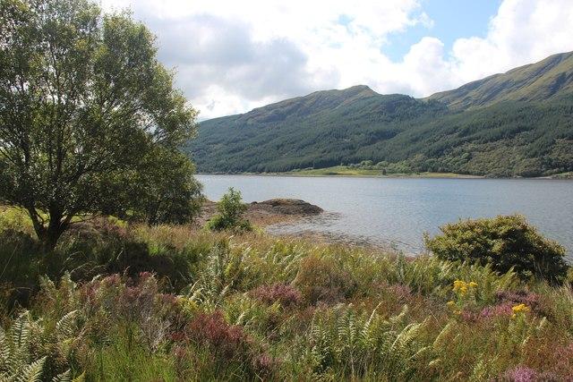 Lush summer growth by Loch Striven