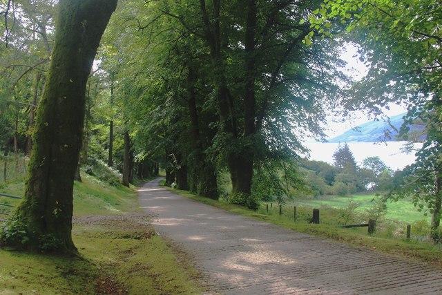 Glenstriven estate, the avenue