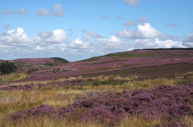 Pamperdale Moor
