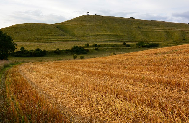 Stubble field and hill fort, Roundway, Wiltshire