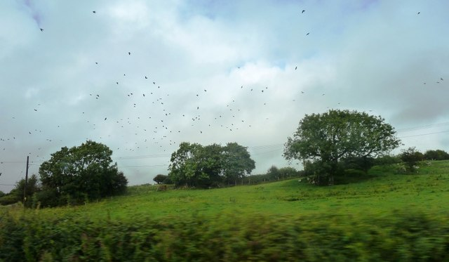Field, trees and crows near Scurlage