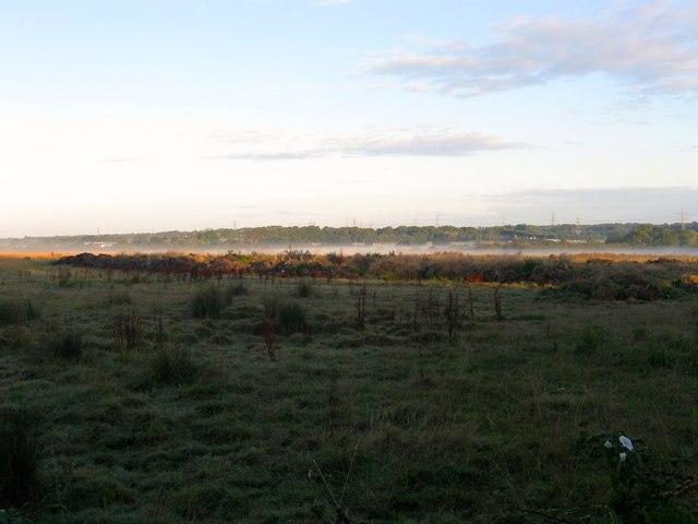 Tanzey Field