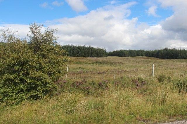Overscaig Plantation