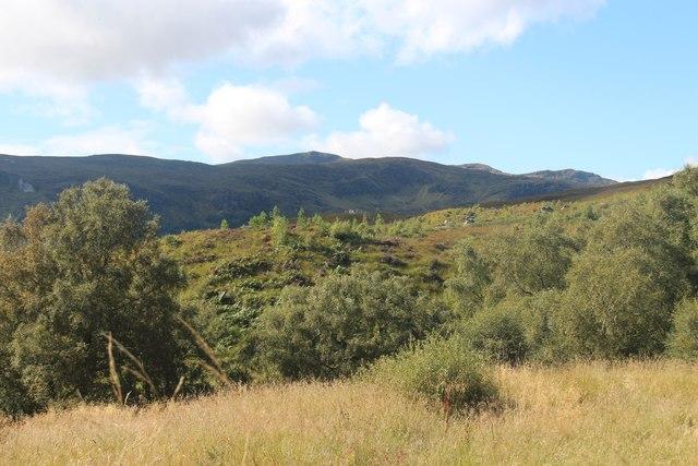Merkland woods showing birch regeneration