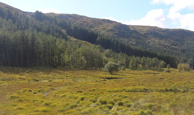 Kinloch Brae Plantation