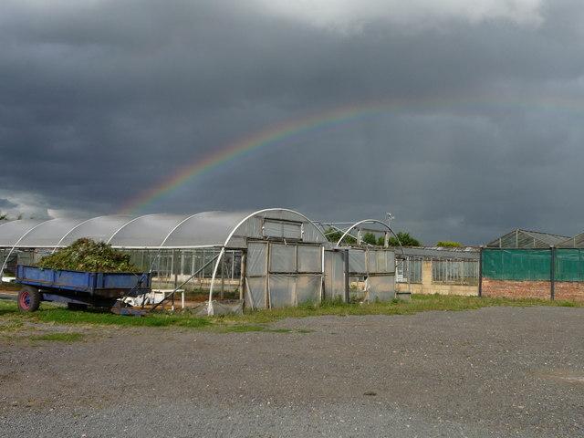Rainbow on a summer's day, New Inn Lane Nurseries