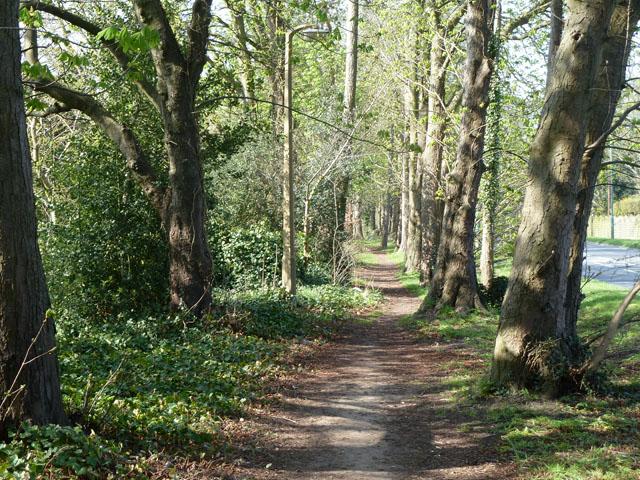 Path by Little Woodcote Lane